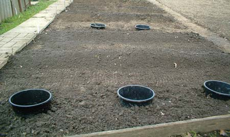potato trenches plot 17