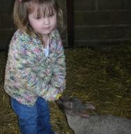 lambs-march-08-002.jpg