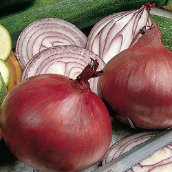 Onion Red Electric