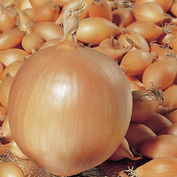 Onion Troy